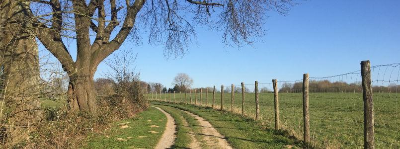Pfad auf Wiese mit Baum und Zaun