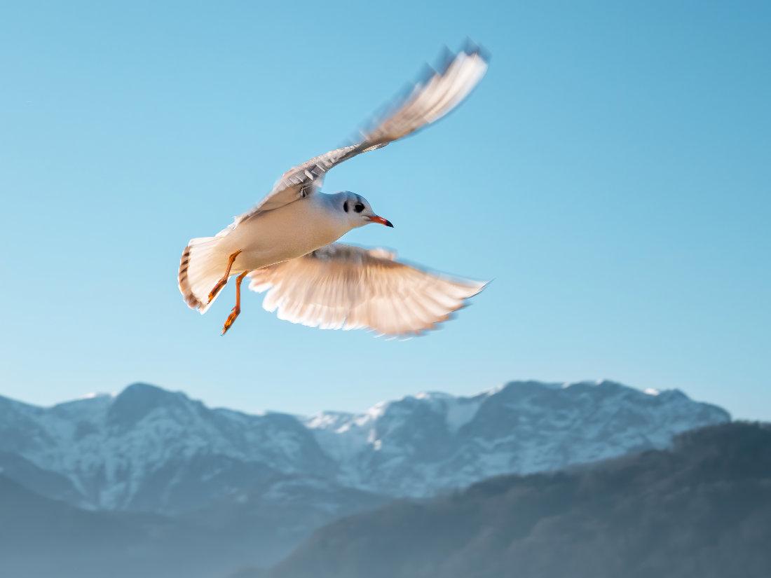 Möwe vor blauem Himmel und Bergen - Natur-Mentaltraining