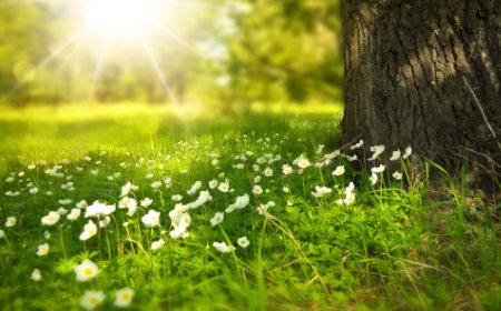 Baum auf Wiese - gesundes Selbstmanagement für Führungskräfte