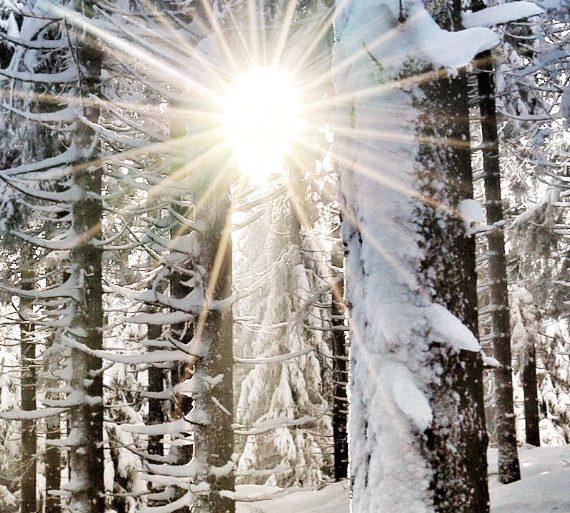 Ausbildung Natur-Mentaltrainer Modul 1 Winter