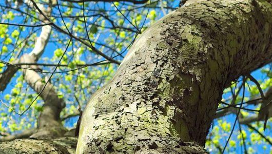 Ausbildung Natur-Mentaltrainer Modul 2 Frühling