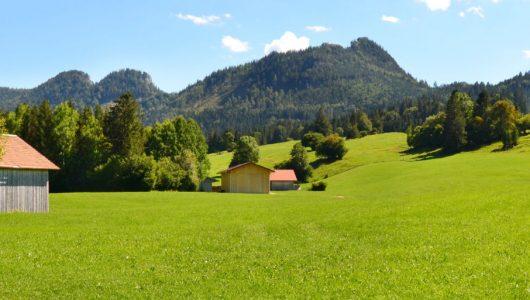 Ausbildung Natur-Mentaltrainer Modul 3 Sommer